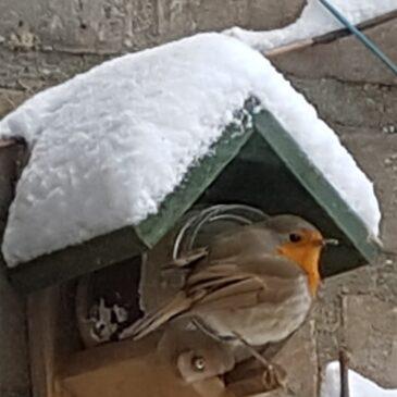 Dan is het opeens volop winter