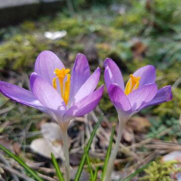 En dan is het opeens volop lente