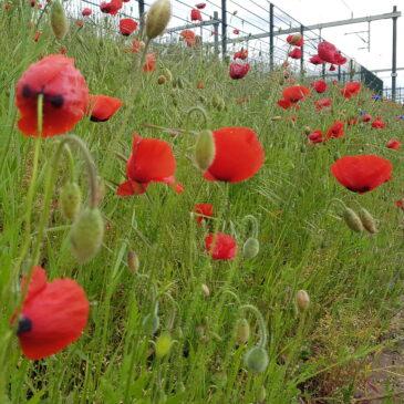 Zomerweer en zomerbloemen